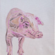 Wilbur the piglet. Sam James Fine Art