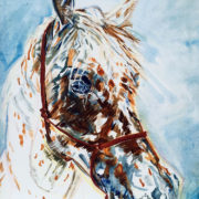 Appaloosa Stallion - Private Commission 50x60cm. Sam James Fine Art