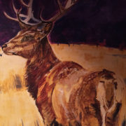 Highland Stag 50x60cm. Sam James Fine Art